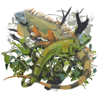 http://romeroleo.com/files/gimgs/th-30_Iguana-iguana.jpg